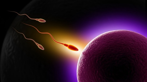 Sperm-eggs-fertilization-pregnancy-Shutterstock-paid